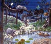 A Pond at Night